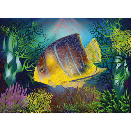 Underwater background with Royal Angelfish, vector illustration  イラスト・ベクター素材