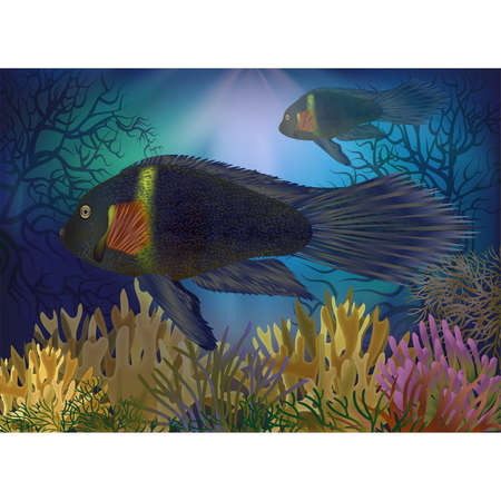 Underwater card with tropical fish, vector illustrationUnderwater card with tropical fish, vector illustration