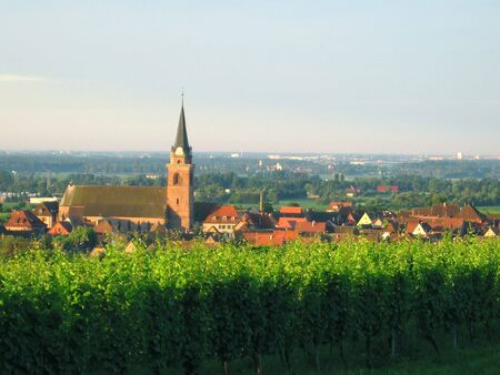 des vins: Wineyards at the north of the alsacian village of Bergheim France