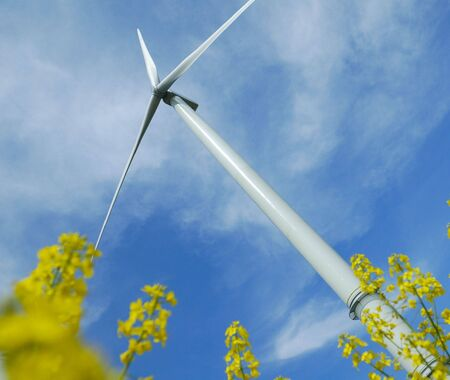 a windturbine into a yellow rape field France Stock Photo