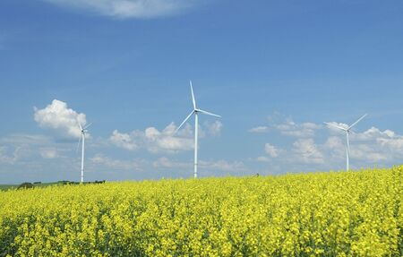 windturbines: farm of windturbines close to rape field France