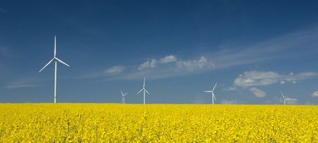 windturbine: farm of windturbines close to rape field France