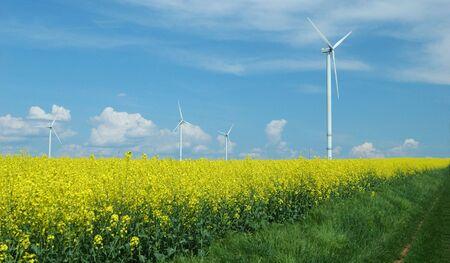 farm of windturbines close to rape field France photo