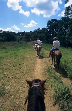 overview: Overview horse riding in Dominican republic countryside