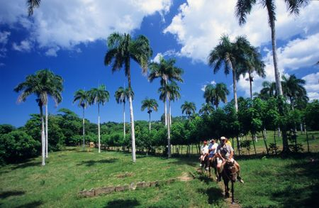 Horse riding in palm trees landscape - Dominican republic countryside Stock Photo