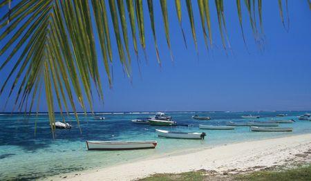 Palm tree and lagoon at Bain Beauf beach. Cape Malheureux, Mauritius Island, Indian Ocean Stock Photo