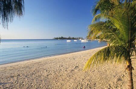 Palm tree and beach at Bain Beauf beach. Cape Malheureux, Mauritius Island, Indian Ocean