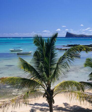 Palm tree, Lagoon  and coin de mire island. Bain Beauf beach. Cape Malheureux, Mauritius Island, Indian Ocean