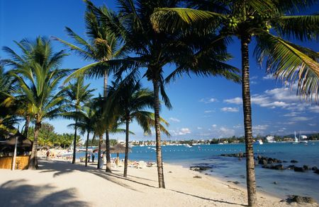 Palm trees on Grand Baie beach at Mauritius Island, Indian Ocean Stock Photo