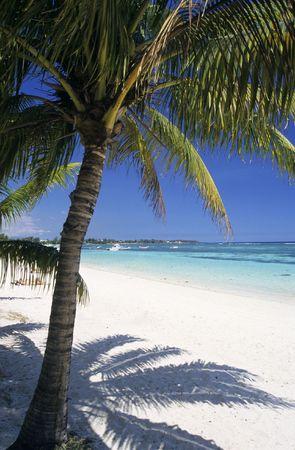 mauritius: Palm tree op Trou aux biches strand, Mauritius eiland. Indische Oceaan Stockfoto