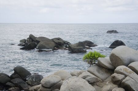 Lonely tree on rocky coast in Cabo San Juan del Guia, Tayrona National Park, Colombia 스톡 콘텐츠