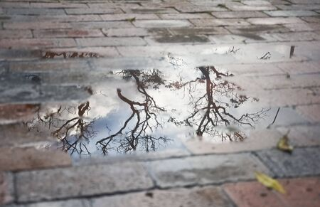 Pfütze auf einem Ziegelboden, in dem sich Bäume und ein Himmel mit Wolken spiegeln, ein regnerischer Nachmittag in Bogota
