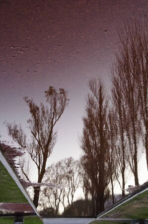 Unusual urban image: trees that are reflected in a puddle of water, on reddish earth
