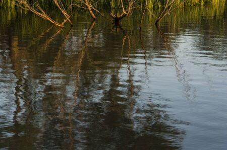 Vegetation branches reflected in moving water in the Tigre Delta, in the province of Buenos Aires, Argentina Standard-Bild