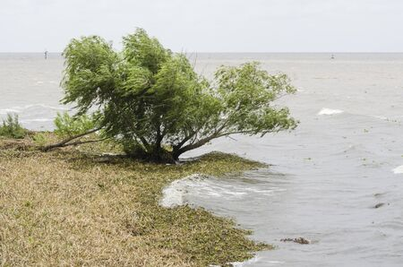 Shore of the Rio de la Plata river in the Costanera Sur ecological reserve, during the summer of 2016, when an invasion of aquatic plants, water hyacinth, Eichhornia crassipes arrived in Buenos Aires