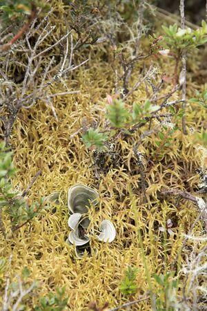 Chingaza National Natural Park, Colombia. Paramo soil: lichen Dictyonema glabratum and sphagnum moss Banco de Imagens