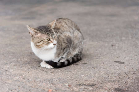 Gray and white tabby stray cat sitting on the concrete floor of a city, looking to one side