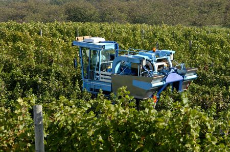 A mechanical grape harvesting machine in a vineyard. Focus = machine. 12MP camera. Фото со стока