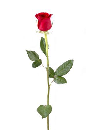 Isolated long stem red rose bud. Focus = front of rosebud. 12MP camera. Imagens - 291261