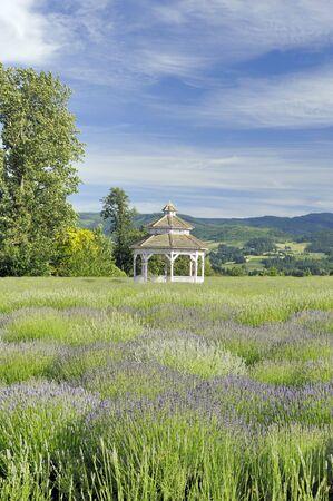 Gazebo on a lavender farm in Hood River, Oregon. Focus = the gazebo. Фото со стока