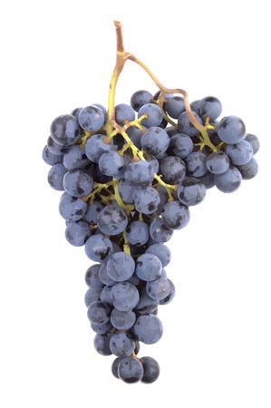 Precisa y realista Pinot Noir de racimo de uva de una bodega. Aislados. VECTOR. Foto de archivo - 5602956