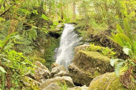 Merriman Falls, Quinault Rainforest, Olympic National Park in Washington state, U.S.A. Фото со стока