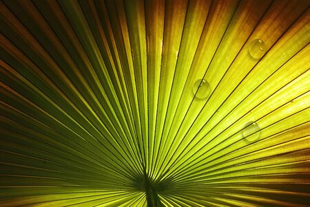 palm leaf designed with water drop