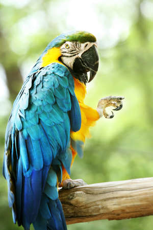 alright: A colorful parrot giving the okay sign