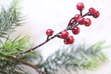 boughs: Red holly berry and evergreen boughs