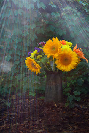 crepuscular: An antique watering can full of flowers with crepuscular rays