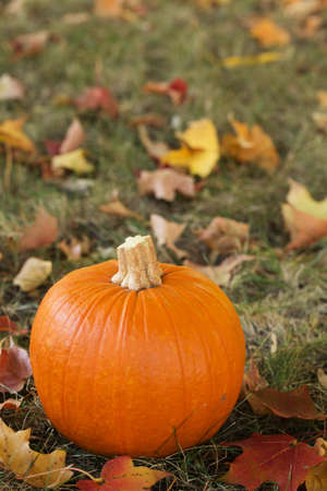A Fall pumpkin in the grass with colorful leaves photo