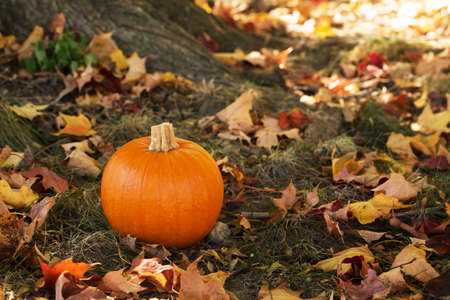 Autumn pumpkin in colorful leaves photo