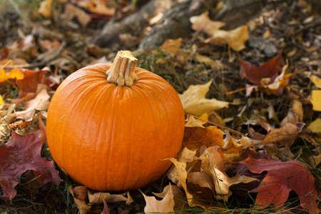 hojas de colores: Ca�da de calabaza de Halloween en hojas de colores