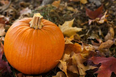 hojas de colores: Ca�da de calabaza de Halloween en hojas de colores de cerca