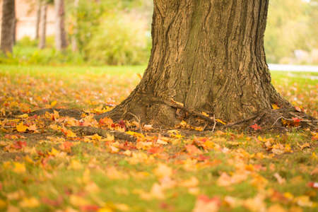 Colorful Autumn leaves and tree trunk with fall colors