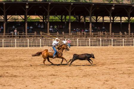 deadwood: Cowboy roping calf at Deadwood South Dakota Rodeo Editorial