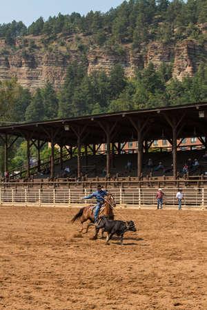 deadwood: Cowboy at a Deadwood South Dakota rodeo roping a calf