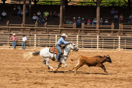 Calf roping competition in Deadwood South Dakota August 29 2015