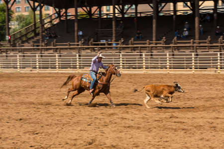 A cowboy chases his calf at a roping competition in Deadwood South Dakota