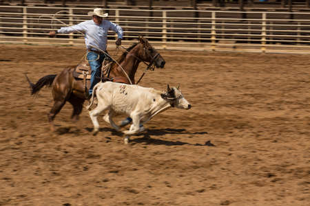 A Deadwood South Dakota rodeo calf roping competition Editorial