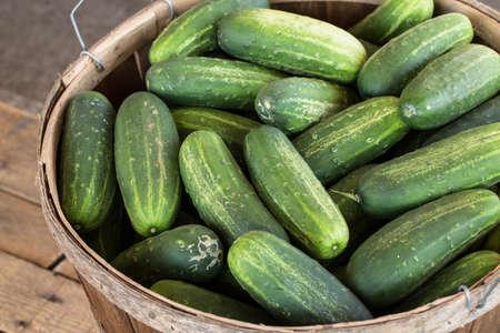 bushel: Bushel of cucumbers for sale at farmers market in Asheville North Carolina