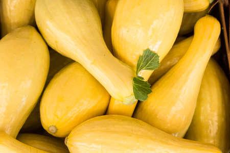 courge jaune pour la vente au marché de producteurs à Asheville en Caroline du Nord