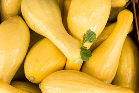 Yellow squash for sale at farmers market in Asheville North Carolina