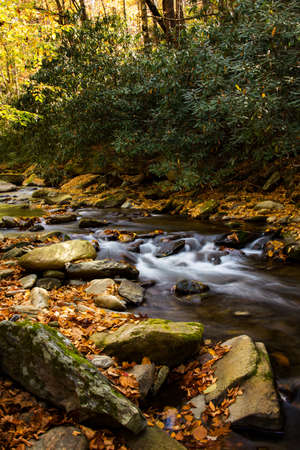 River with autumn leaves and mossy rocks Smoky Mountains National Park vertical Фото со стока
