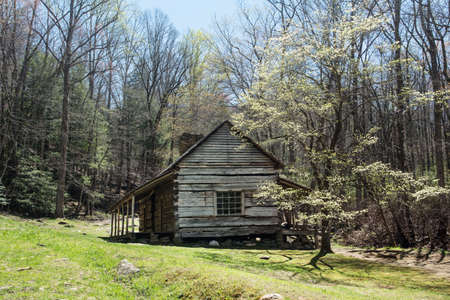 Bud Ogle Cabin with a blooming spring Dogwood tree located in Smoky Mountains National Park of Tennessee Stock Photo