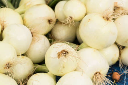Close up of fresh onions at the farmers market in Knoxville Tennessee