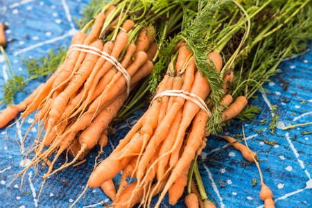 Bunches of orange carrots on a table at the farmers market in Knoxville Tennessee Stock Photo
