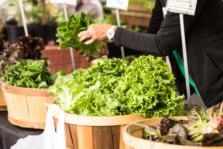 A woman arranges lettuce in wooden baskets at the farmers market in Knoxville Tennessee Stock Photo