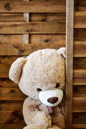 Teddy Bear Isolated Standard-Bild