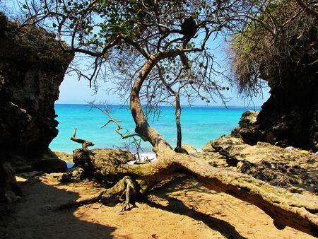 sandal tree: Playa Blanca
